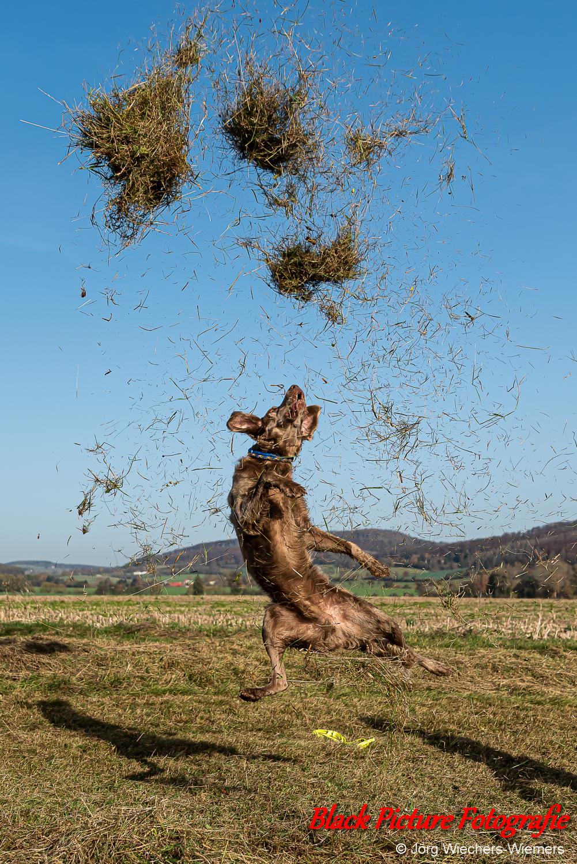 Hundefotografie, Hundeliebe, Dog, Hund, Dogphotography, Hundeleben, Dogs, Hunde, Doglover, Dogoftheday, Hundeblick, Doglife, Hundewelt, Doglove, Hundefoto, Hundemodel, Hundefreunde, Tierfotografie, Weimaraner, Black Picture Fotografie